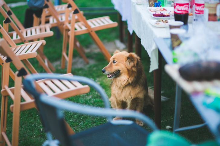 Essentials For The Perfect Garden Party - Domestic Deadline