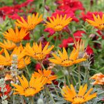 Backyard Brilliance – 5 Garden Renovation Tips For Lasting Beauty