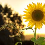 Handy Tips For Planting During Summer